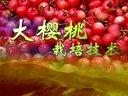大樱桃栽培技术
