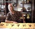 许乃风个人书法展 书法教学视频8