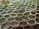 西瓜种植技术(2) (529播放)