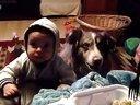 汪星人说mama与宝宝抢食物