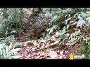 寰宇地理之丛林深处:丛林深处之探索新疆界