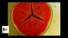 夏日消暑记 萌爆了!舌尖上的西瓜