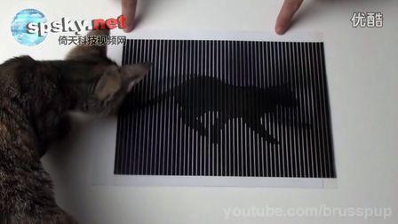 超酷!难以置信的光学幻觉动画(喵星人看蒙了)