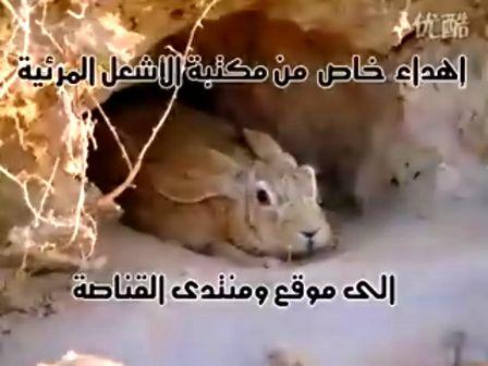 世上最强的兔子,反应极其敏捷