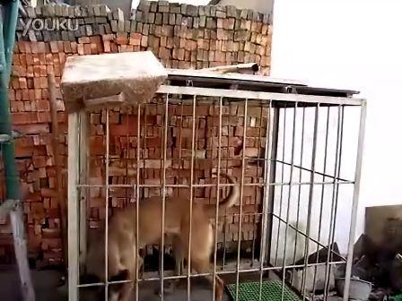 自制马犬笼子设计图