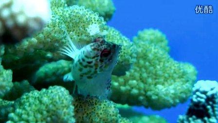 纪录片【菲律宾图巴塔哈群礁海洋公园】