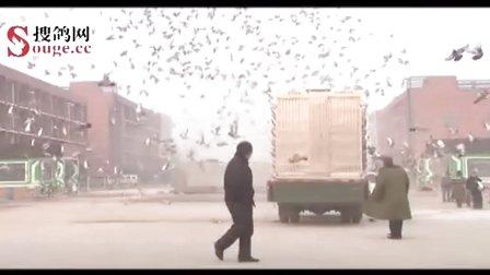 视频-搜鸽网的频道-优酷视频视频戴翰霆图片