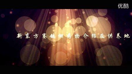 重庆新东方国际赛鸽公棚视频