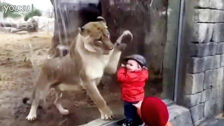 萌宝示范如何隔空调戏大狮子