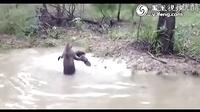 一场跨种族的战斗:德国獒VS澳洲袋鼠。。。。